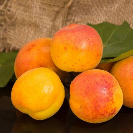 Abricotier armeniaca Orangered®