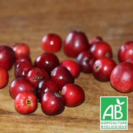 Canneberge à gros fruits, Airelles, Cranberry macrocarpon Howes
