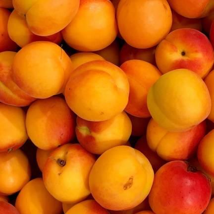 Abricotier armeniaca Rouge Tardif Delbard® 'Delmast'