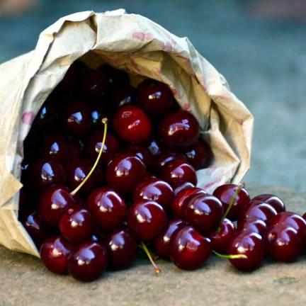Cerisier racines nues Bigarreau Délice de Malicorne® 'Agoudel'