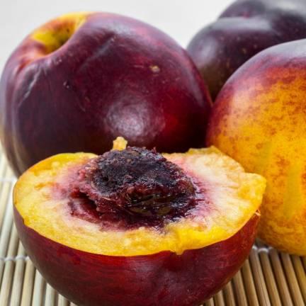 Nectarinier racines nues Sanguine d´Auvergne® 'Pilsang'
