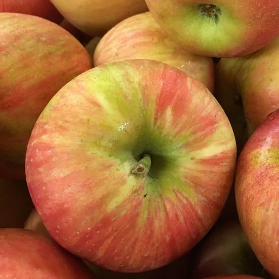 Pommier pumila Pomme des Moissons® 'Delprivale'