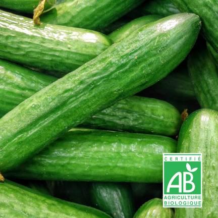 Graines de Concombre Vert Long Maraîcher BIO
