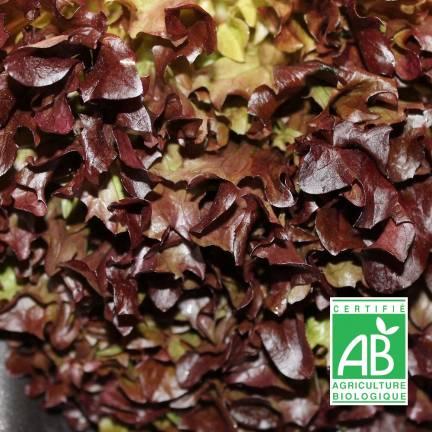 Graines de Laitue à couper Red Salad Bowl BIO