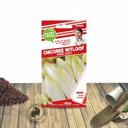 Graines d'Endive Witloof Normale
