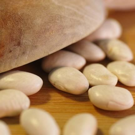 Graines de Haricot nain à écosser Coco blanc