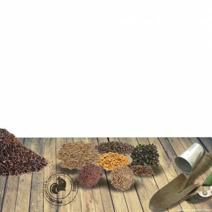 Graines de Haricot nain Lingot à écosser