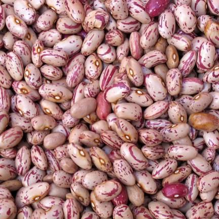 Graines de Haricot nain à écosser Coco Flambo