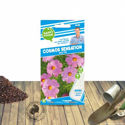 Graines de Cosmos sensation rose pure