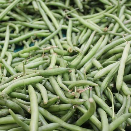 Graines de Haricot Nain mangetout Castandel