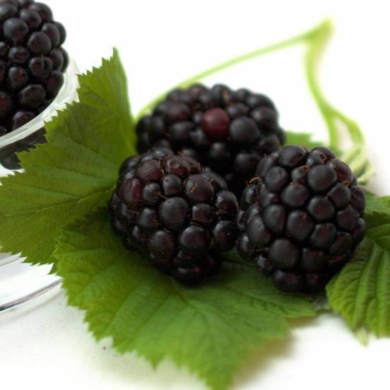 Mûre fruticosus Karaka Black