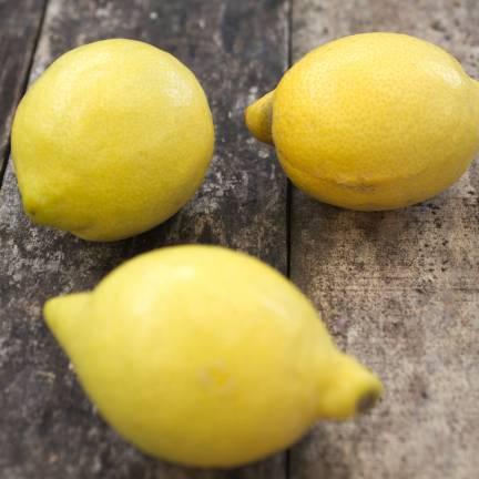 Citronnier limon La Valette