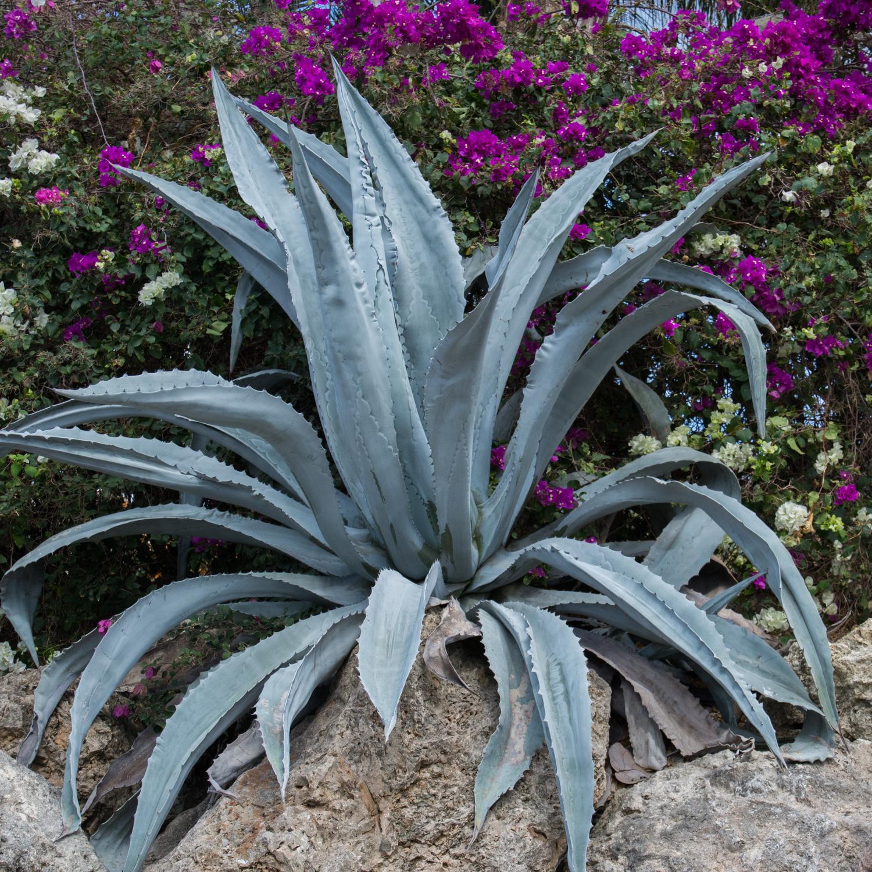 plante verte mediterraneenne