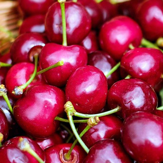 Cerisier cerasus Garden Bing®