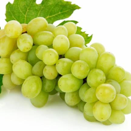 Vigne vinifera Exalta