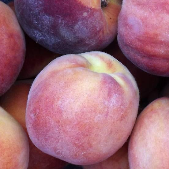 Pêcher persica des Vignes jaune