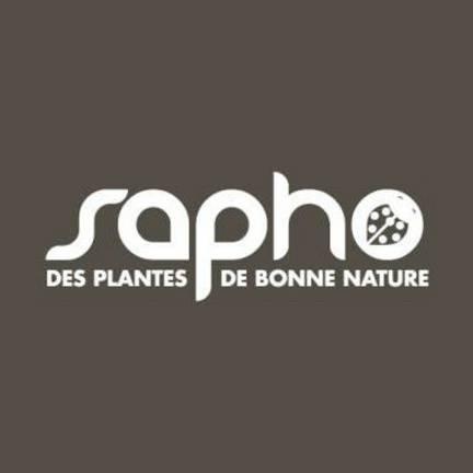Buisson ardent coccinea Saphyr® Jaune 'Cadaune'