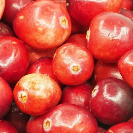 Canneberge à gros fruits, Airelles, Cranberry macrocarpon Pilgrim