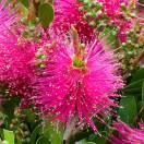 Rince-bouteille vinimalis Hot Pink® KK01