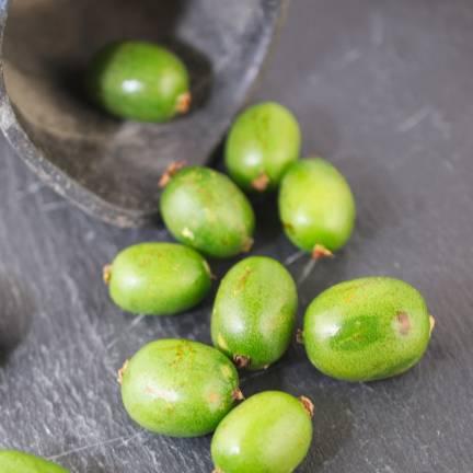 Kiwi de Sibérie arguta Vitikiwi® (Autofertile)