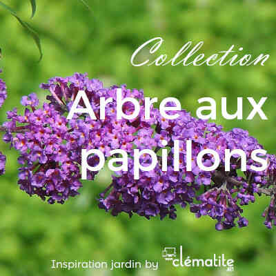 Collection Arbre aux papillons