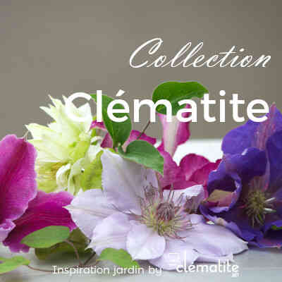 Collection Clématite