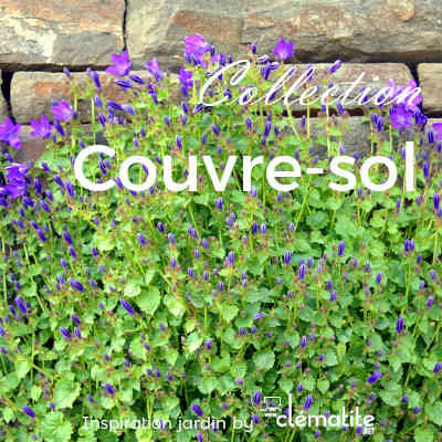 Collection Couvre-sol