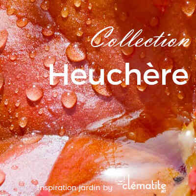 Collection Heuchère
