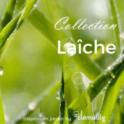 Collection Laîche