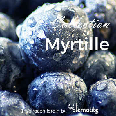 Collection Myrtille