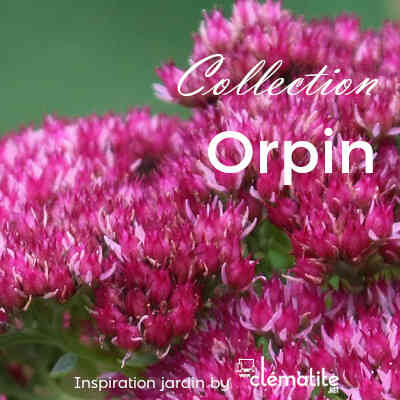 Collection Orpin