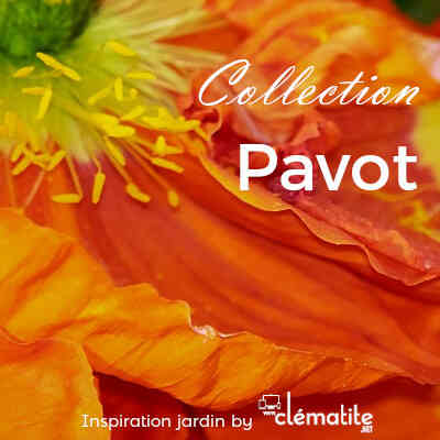 Collection Pavot