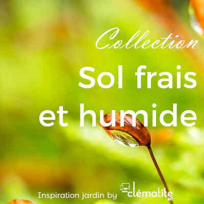 Collection Sol frais et humide