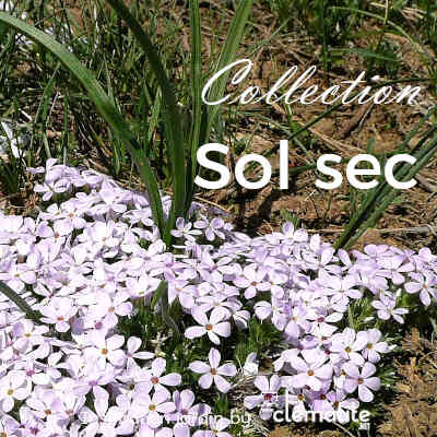 Collection Sol sec