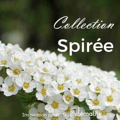 Collection Spirée