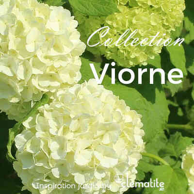Collection Viorne