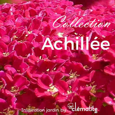 Collection Achillée