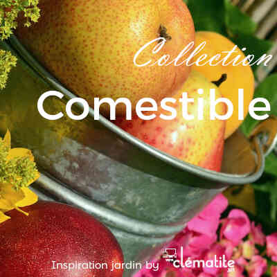 Collection Comestible
