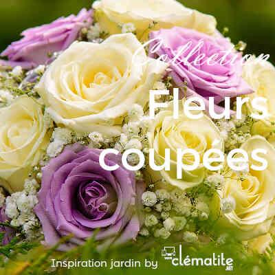 Collection Fleurs coupées