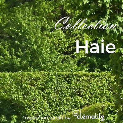Collection haie