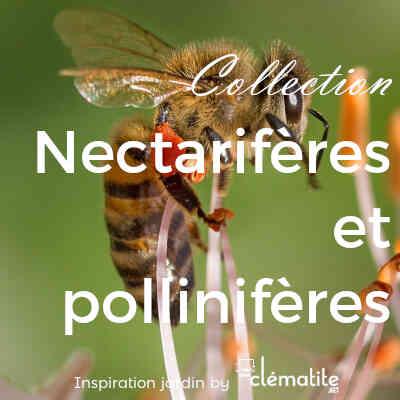 Collection Nectarifères et pollinifères pour les abeilles