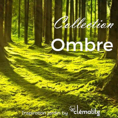 Collection ombre