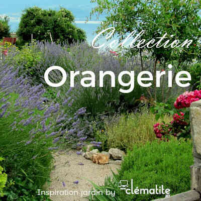Collection orangerie