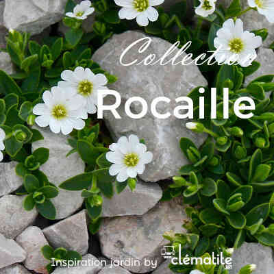 Collection rocaille