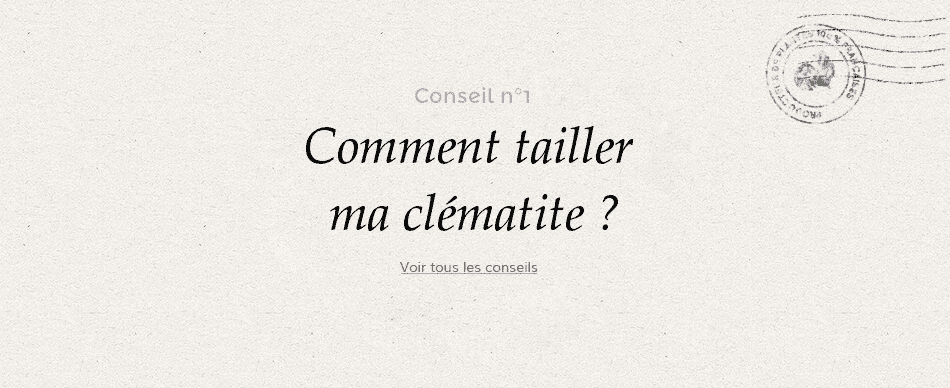 Comment tailler ma clematite.png