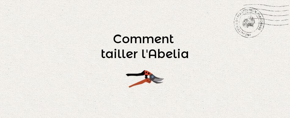 Comment tailler l'abelia
