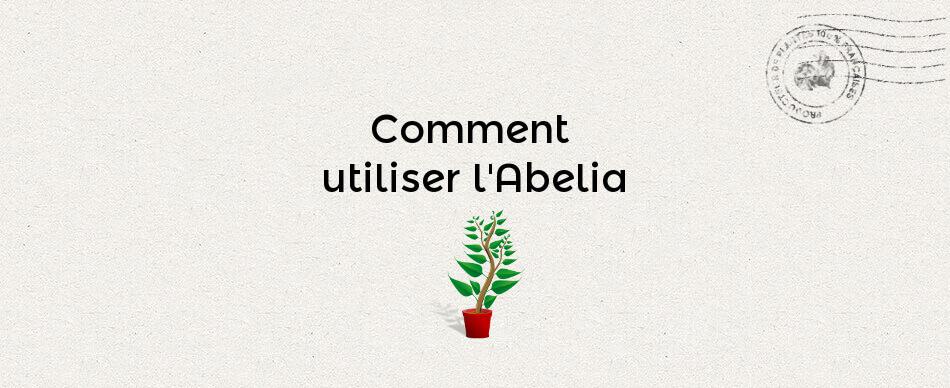 Comment utiliser l'abelia ?