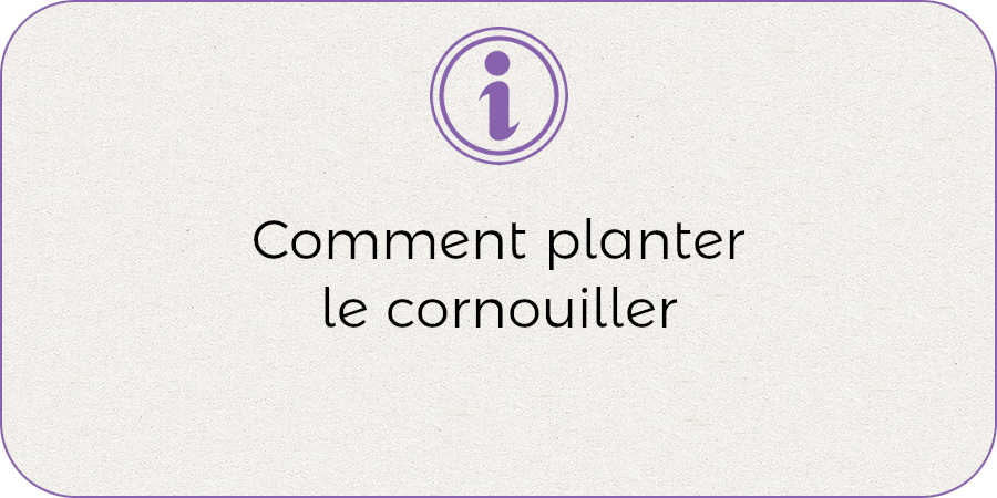 Comment planter le cornouiller !