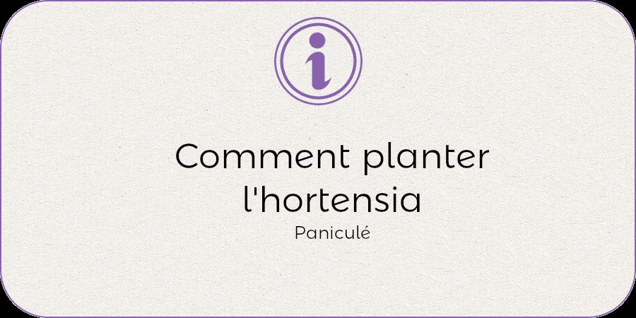 Comment planter l'hortenisa panuculata !