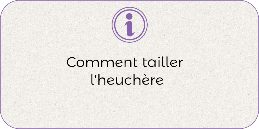 Comment tailler l'heuchere